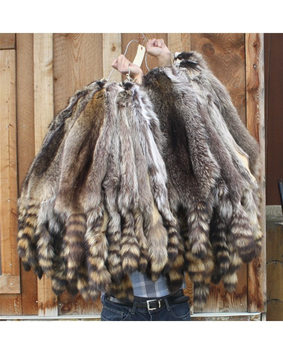 Select Heavy Canadian Raccoon Pelts For Sale