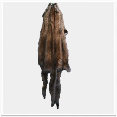 FISHER PELT - #2 QUALITY