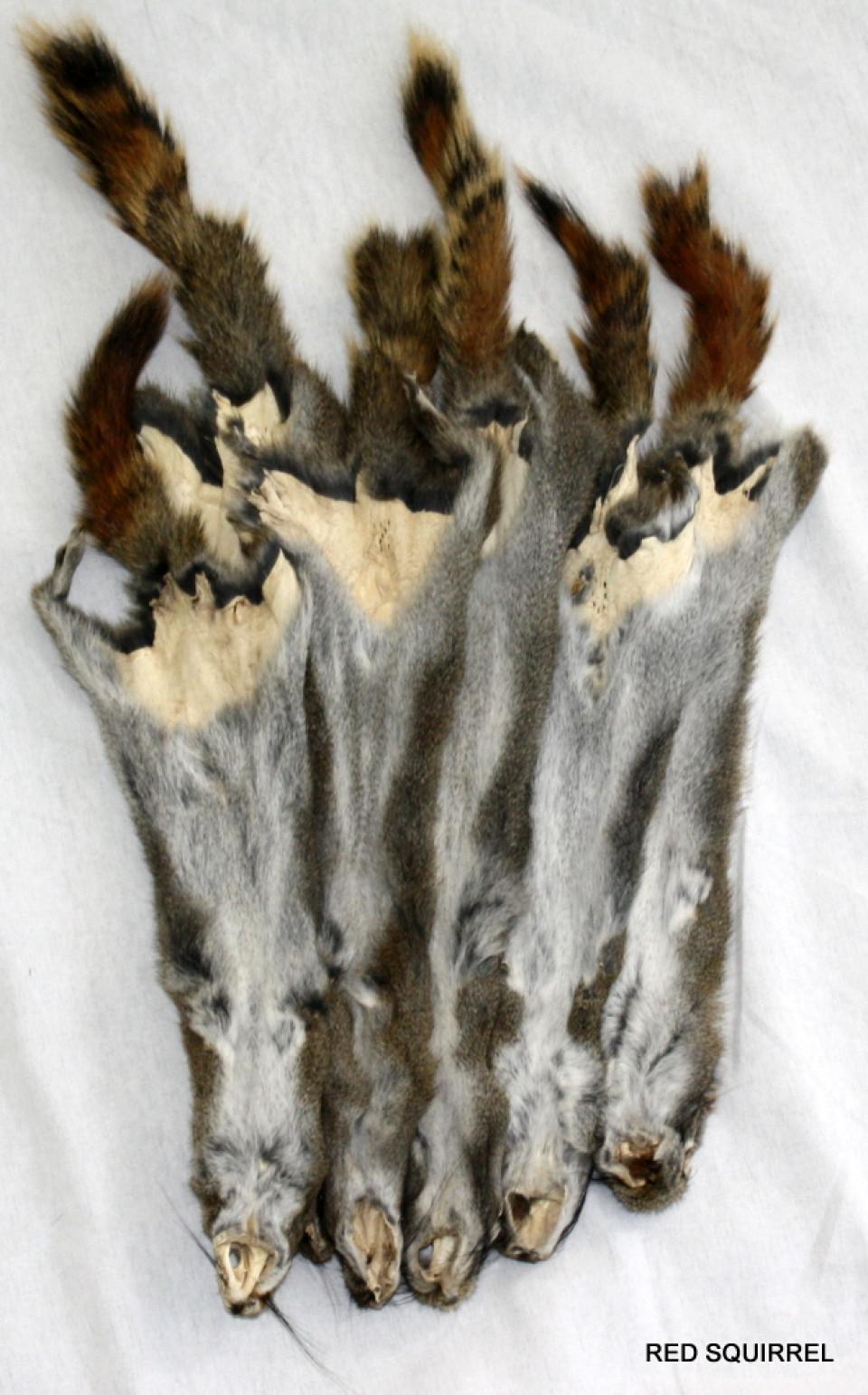 Glacier Wear - red Sqirrel Pelts For Sale for Lynx Pelt  588gtk