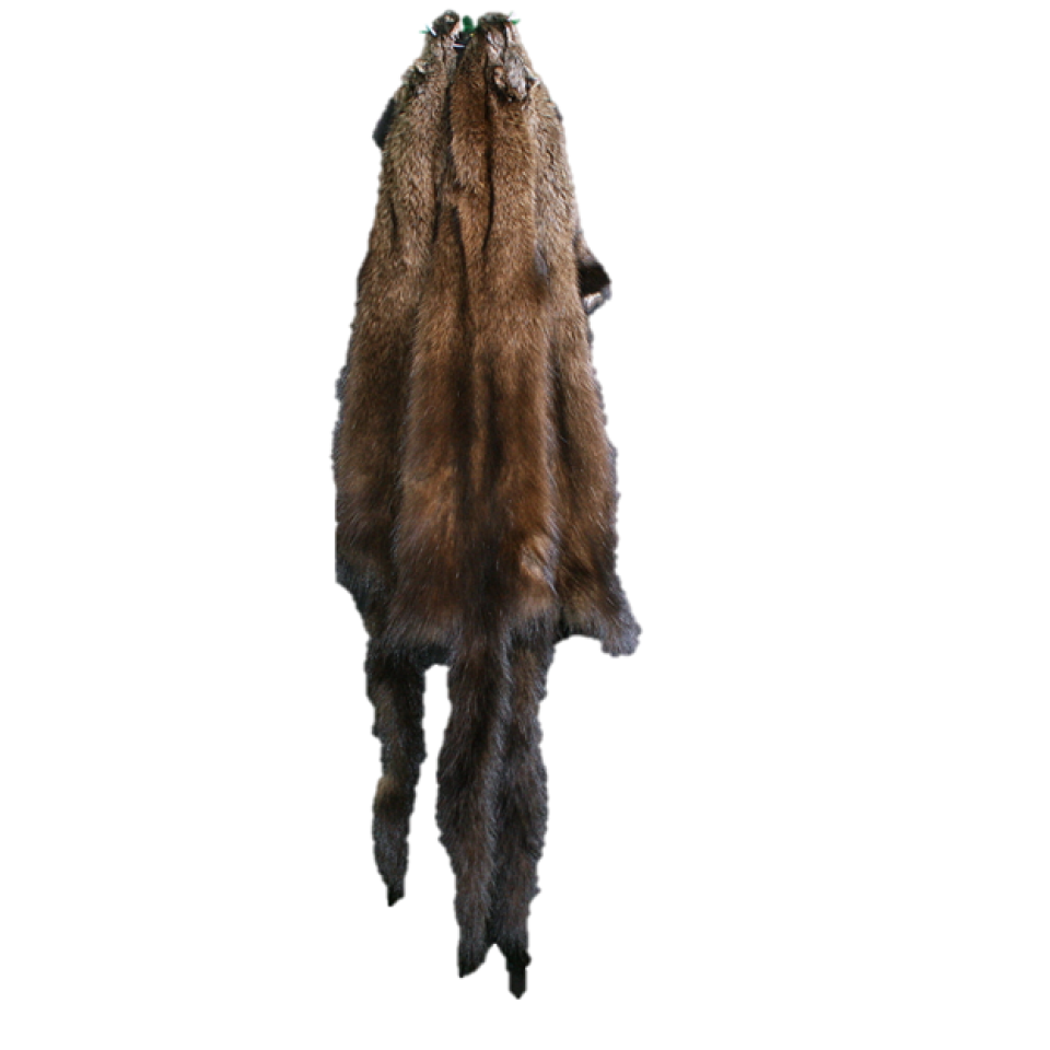 Fisher Pelts For Sale