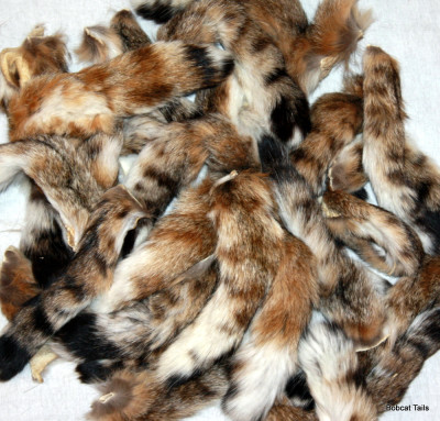12 JUMBO NATURAL color FOX TAIL KEY CHAIN foxes wild animals novelty animal fur