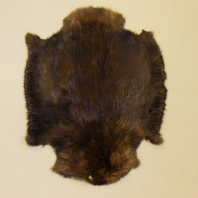BEAVER PELT - SELECT QUALITY, NORTH-EASTERN (Quebec)