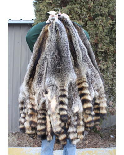 RACCOON PELT - SELECT NORTH CENTRAL