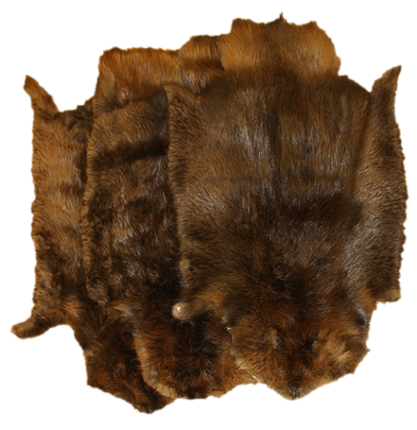 Large 55-60 Inches Glacier Wear Western Beaver Pelt