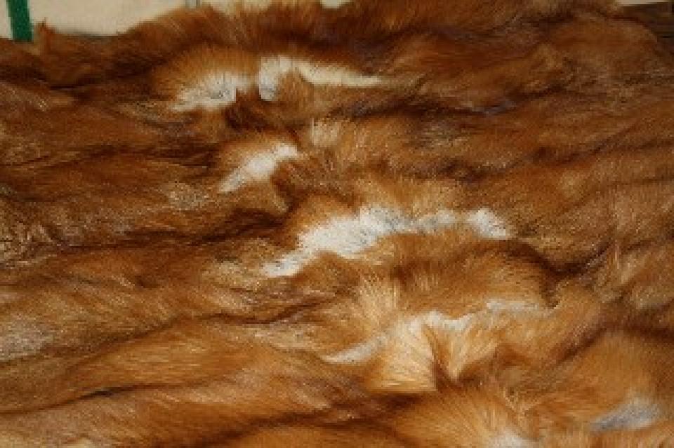 Glacier Wear Red Fox Fur Blanket 60 Quot X 72 Quot For Sale