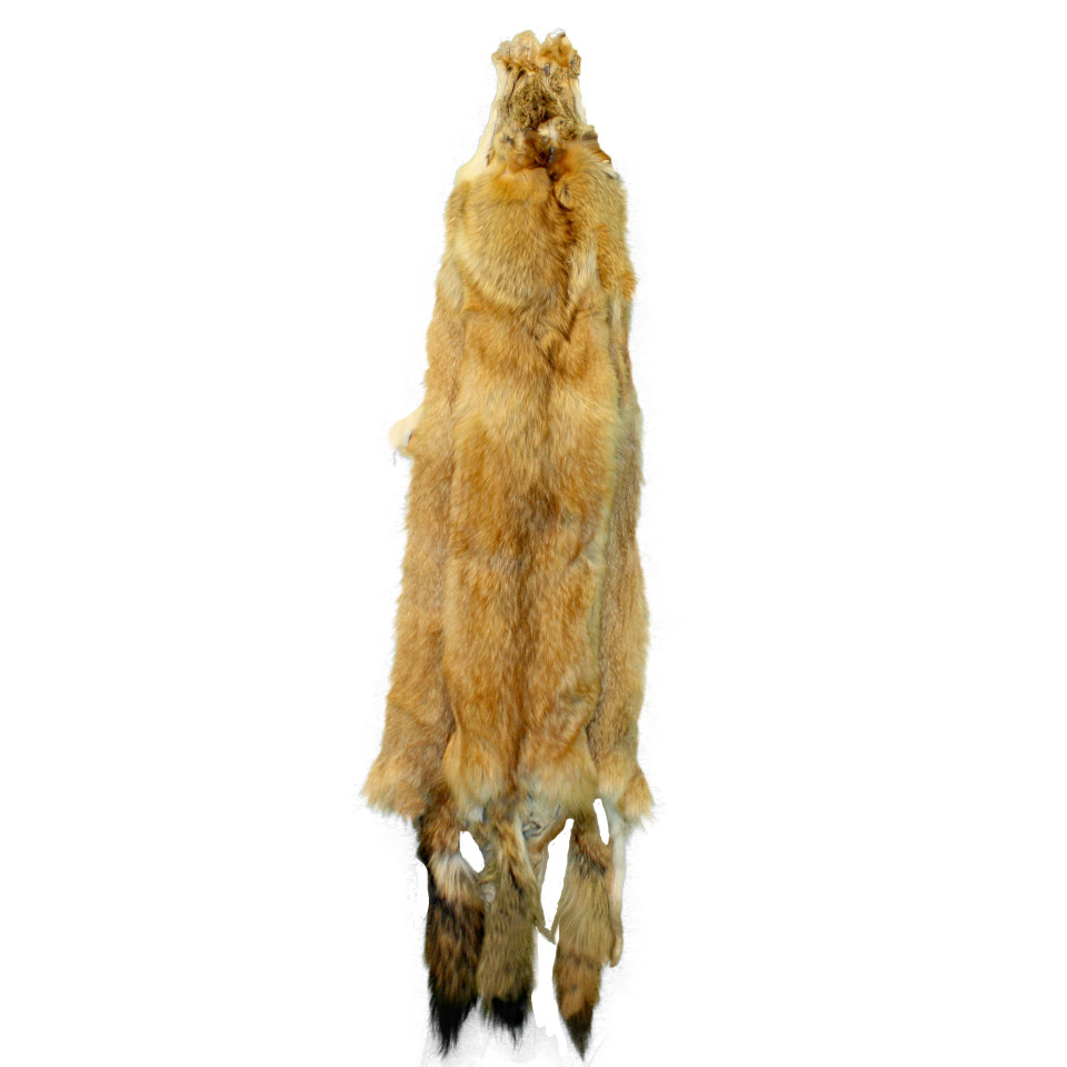 Glacier Wear Red Fox Colored Coyote Pelts For Sale